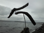 Driftwood sculpture/Lincoln Park, by Sky Darwin (1)